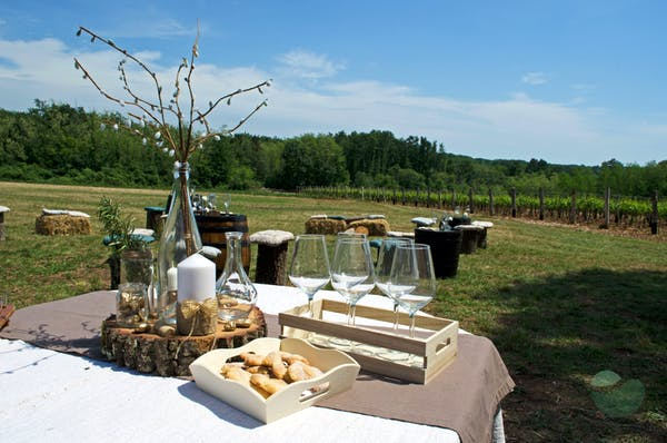 Wine tasting surrounded by peaceful nature in vineyard